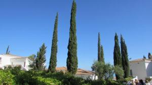 Кипр, кипарисы