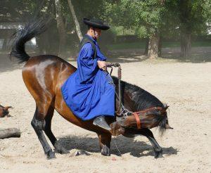 Венгрия конные скачки